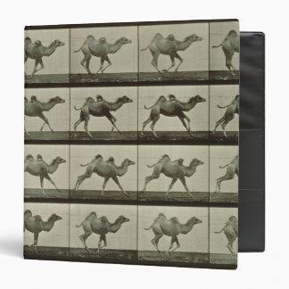 Camello placa de la locomoción animal 1887 b