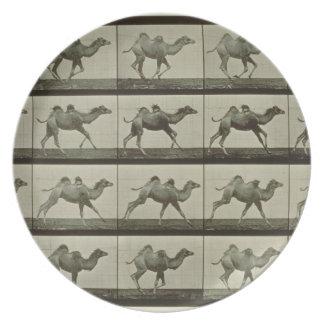 Camello placa de la locomoción animal 1887 b plato