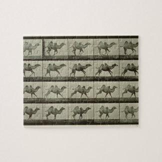 Camello placa de la locomoción animal 1887 b rompecabeza con fotos
