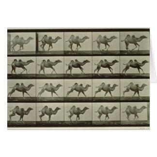 Camello placa de la locomoción animal 1887 b tarjetas