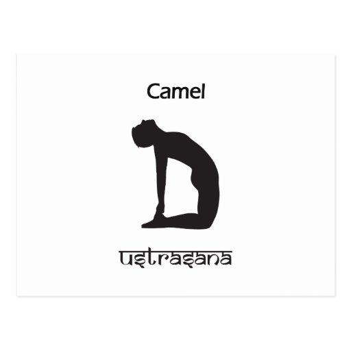 Camello Postales