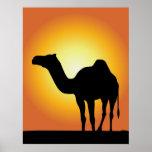 Camello Poster