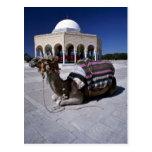 Camello que descansa delante de la bóveda, Monasti Postal