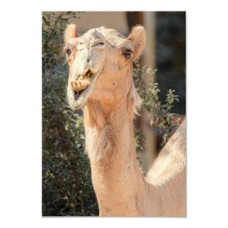 """Camello que mira fijamente mientras que mastica invitación 3.5"""" x 5"""""""