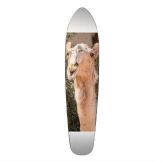 Camello que mira fijamente mientras que mastica patineta personalizada
