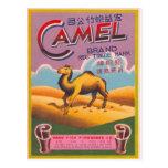 Camello retro de la etiqueta del petardo del kitsc tarjetas postales