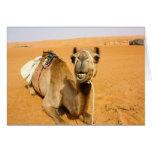 Camello sonriente divertido felicitación