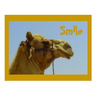 Camello sonriente en perfil tarjetas postales