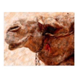 camello tarjeta postal