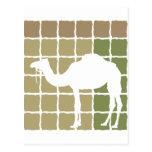 Camello Tarjetas Postales