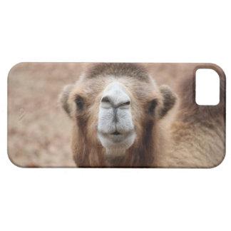 Camello tonto iPhone 5 cobertura