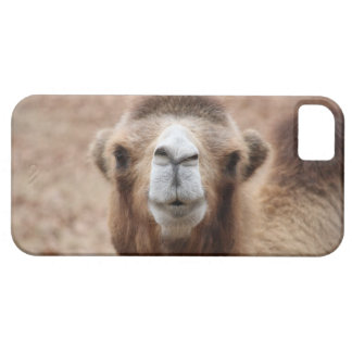 Camello tonto iPhone 5 funda
