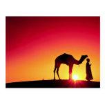 Camello y conductor en la puesta del sol, la India Tarjetas Postales