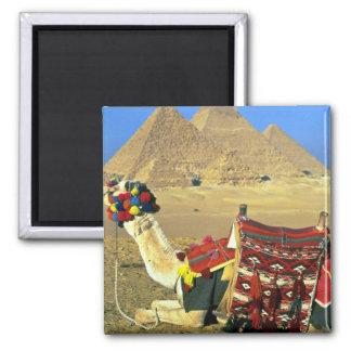 Camello y pirámides, El Cairo, Egipto Imán Cuadrado