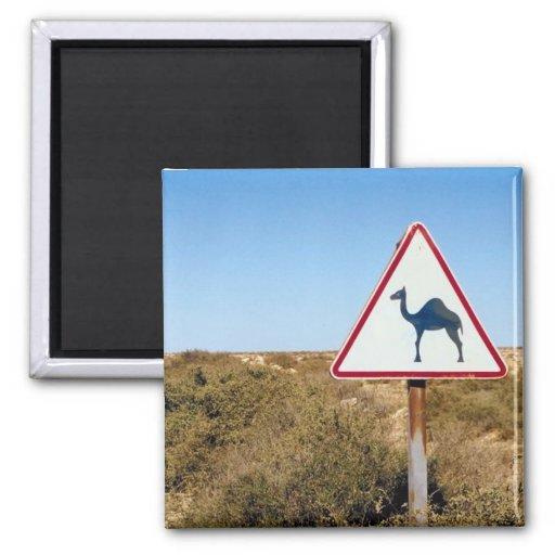 Camellos amonestadores a continuación imán de frigorífico