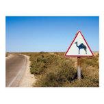 Camellos amonestadores a continuación tarjeta postal