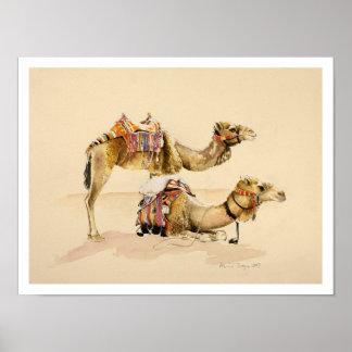 Camellos de Petra 2007 Póster
