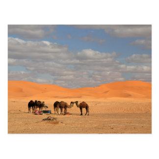 Camellos en desierto del Sáhara Tarjeta Postal