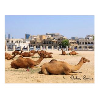 Camellos en Doha Tarjetas Postales