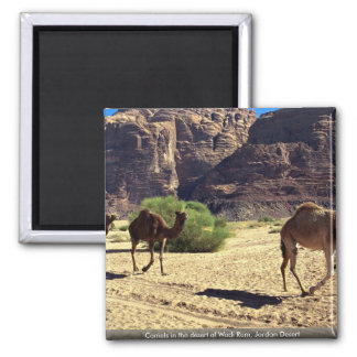 Camellos en el desierto del ron del lecho de un rí imán de frigorífico