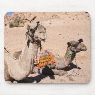 Camellos en el desierto en St. Catherine Alfombrillas De Raton