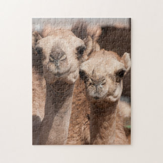 Camellos en el mercado del camello en Al Ain cerca Puzzle