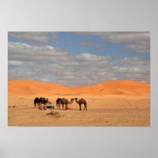 Camellos en poster del desierto del Sáhara