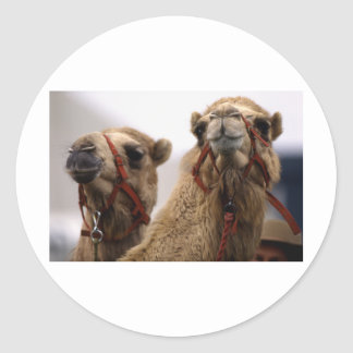 Camellos Etiqueta Redonda