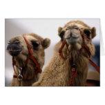 Camellos Felicitación
