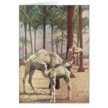 Camellos Felicitaciones