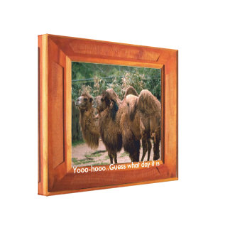 Camellos Impresión En Lona Estirada