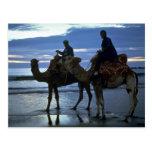 Camellos, Marruecos Tarjetas Postales