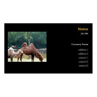 Camellos, parque zoológico tarjetas de visita