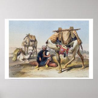 Camellos que descansan en el Sherkiyeh, tierra de  Póster