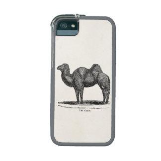 Camellos retros del viejo ejemplo del camello de l