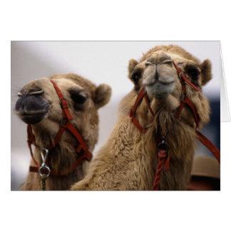 Camellos Tarjeta De Felicitación
