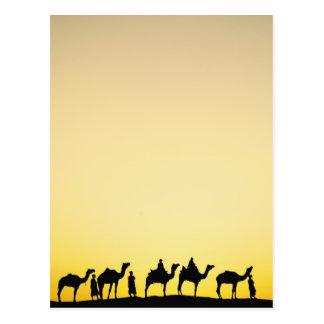 Camellos y conductor del camello silueteado en la postal