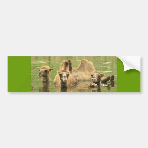 Camellos Yum Etiqueta De Parachoque