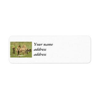 Camellos Yum Etiqueta De Remitente