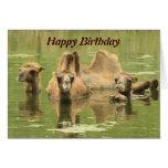 Camellos Yum Tarjeta