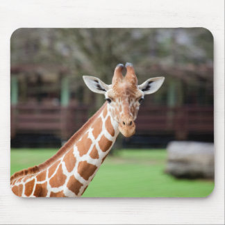 Camelopard (giraffe) mouse pad
