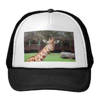 Camelopard jirafa gorros bordados