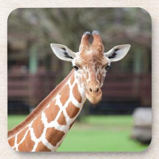 Camelopard (jirafa) posavaso