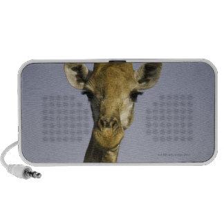 (camelopardalis del giraffa), mirando la cámara, a iPod altavoz