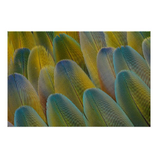 Camelot Macaw Feather Abstract Poster