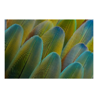 Camelot Macaw Feather Design Poster
