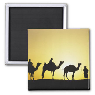 Camels and camel driver silhouetted at sunset, 2 refrigerator magnet