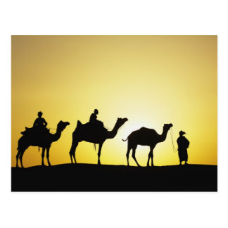 Camels and camel driver silhouetted at sunset, 2 postcard