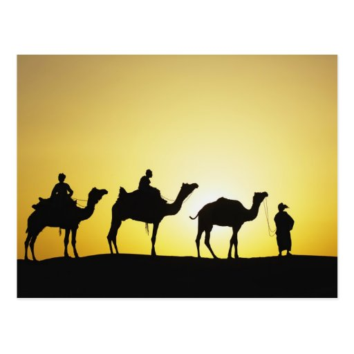 Camels and camel driver silhouetted at sunset, 2 postcards