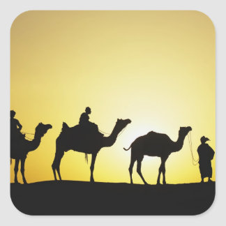Camels and camel driver silhouetted at sunset, 2 square sticker